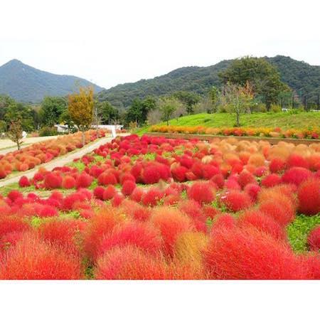 美しい秋をシェアしよう!愛媛近県のフォトスポット