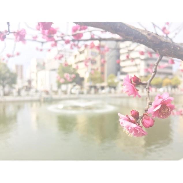 城山公園梅の花
